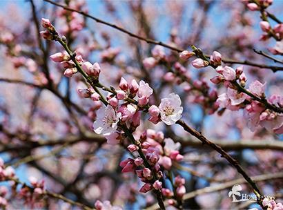 트리컬투어 벚꽃미식 4박5일